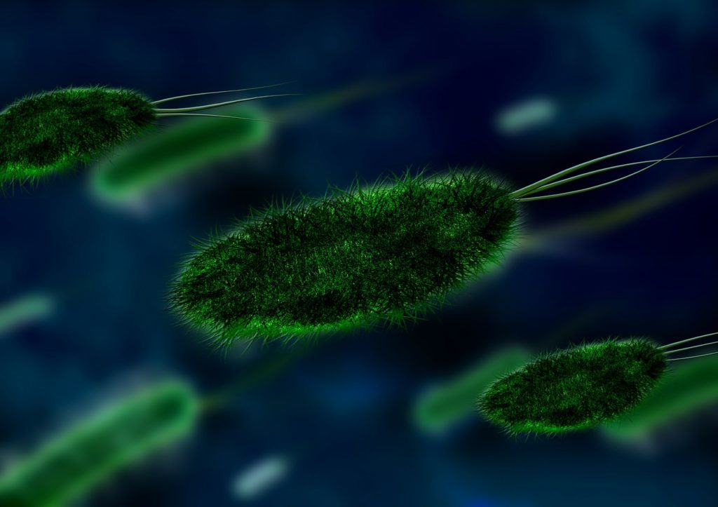 What is Bacterial